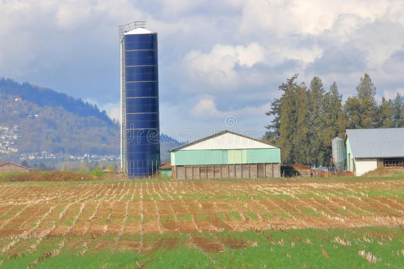 Tall Narrow Silo and Corn Field royalty free stock photos