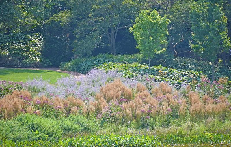Tall orange grasses in garden. Tall orange grasses in field with lavender flowers and forest in background royalty free stock photography