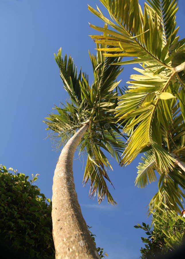Tall Palm Tree Ground View stock photo