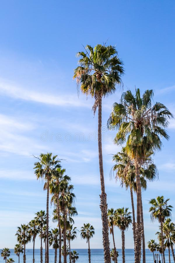 Palm Trees with the Ocean Behind royalty free stock photography
