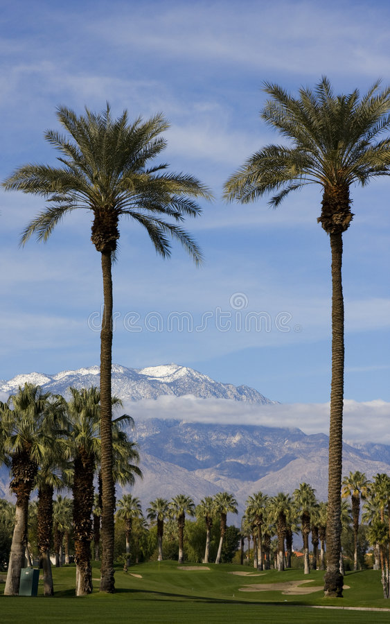 Tall Palm Trees On A Golf Course Stock Photography