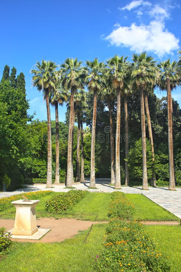 Tall palm trees at the National Garden of Athens Greece royalty free stock photo