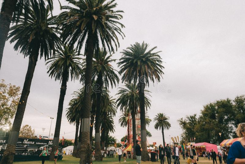 Tall palm trees in a park stock photo