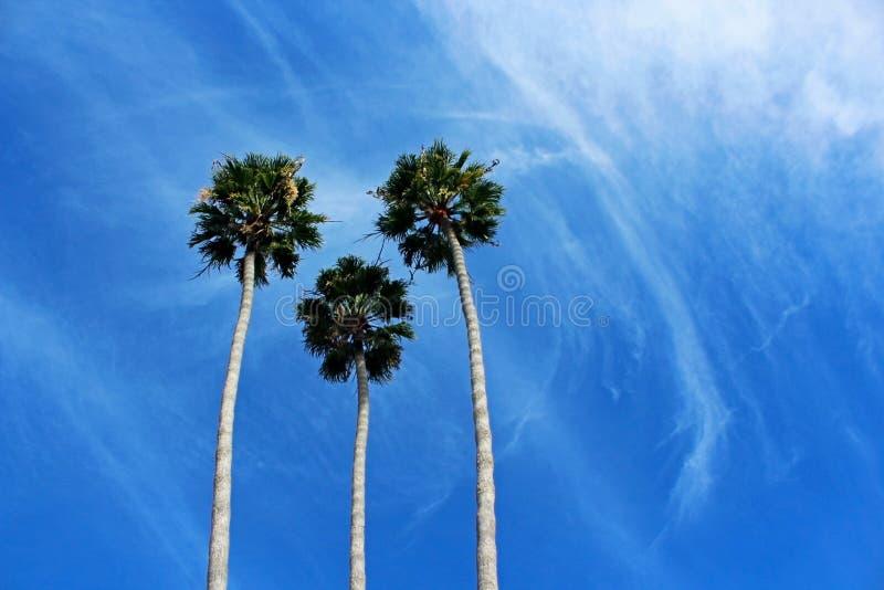 Palm Trees The Symbol Of California Coast City Stock Photo Image