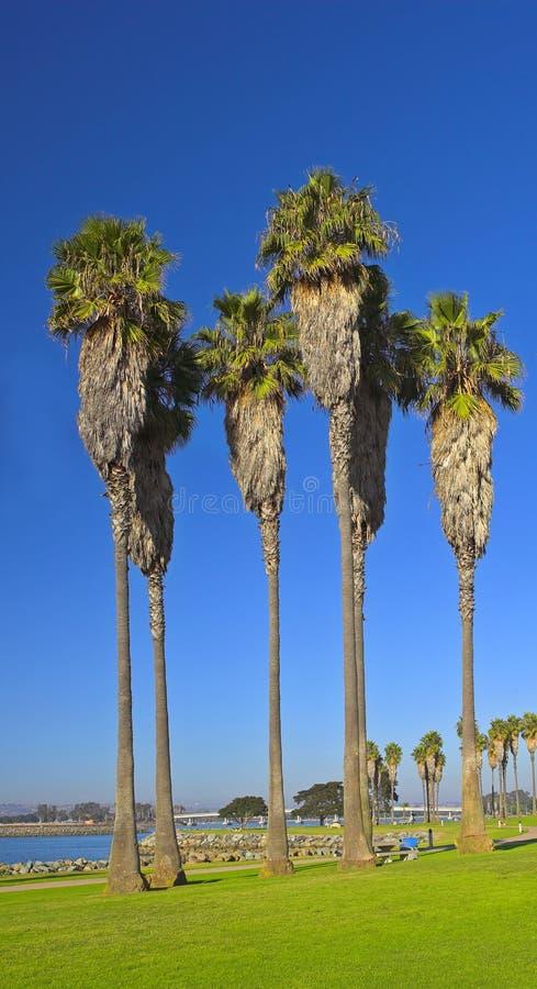 Tall palms