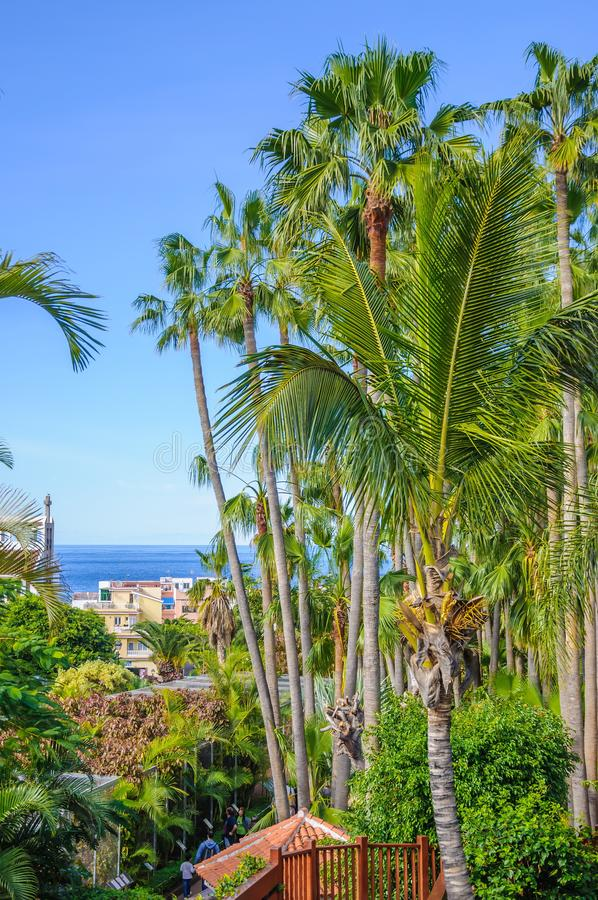 Tall palms in Loro Parque, Tenerife on Canary Islands.  royalty free stock photo