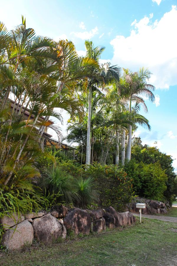 Tall palms and tropical greenery in front of Australian house built up on a hill royalty free stock images