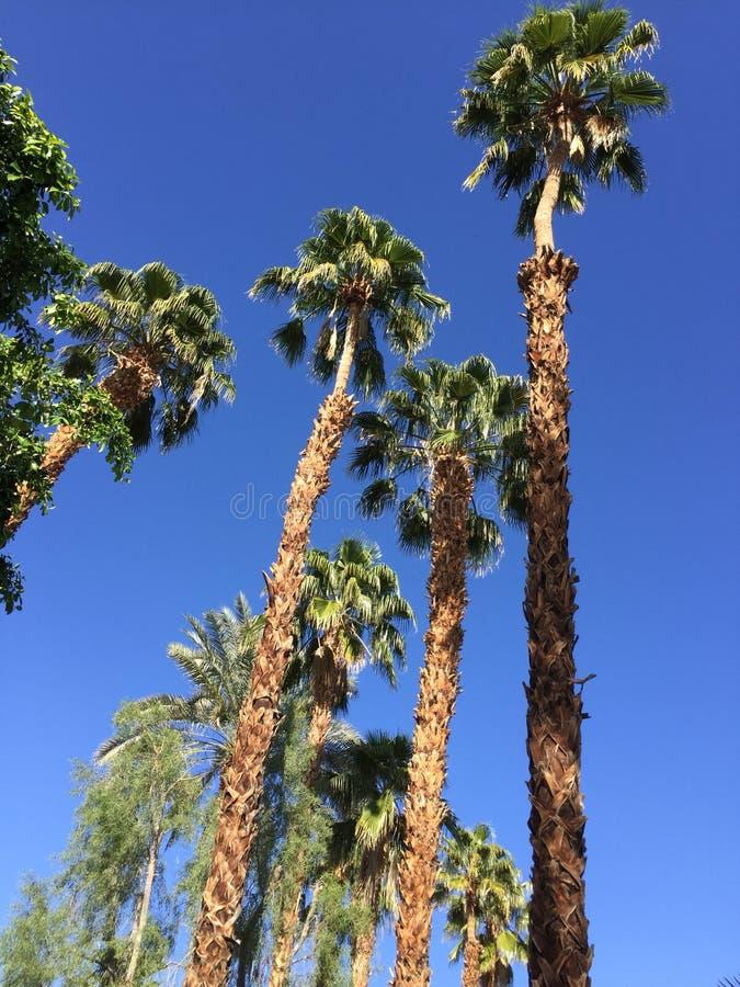 California Palmtrees stock photography