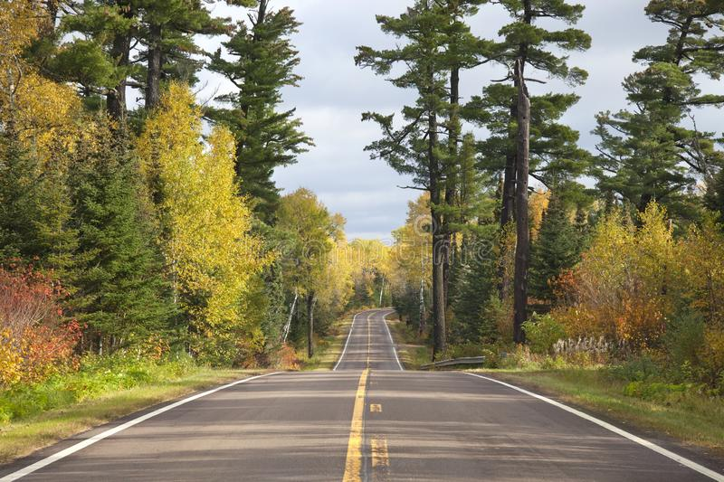 Tall pines on Minnesota`s Gunflint Trail during autumn royalty free stock photo