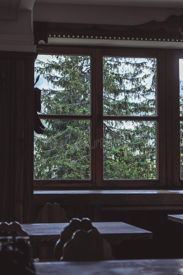 Tall pines outside window stock images