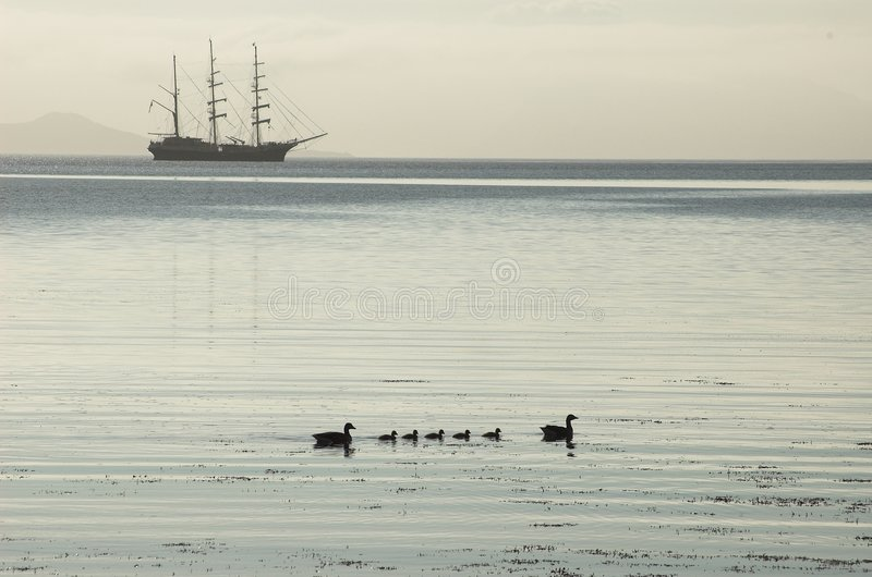 Tall Ship Silhouette, Ducklings, Calm Waters royalty free stock photo