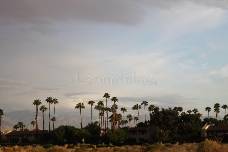 Palm tree city 3830 stock photo