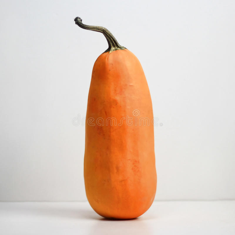 Tall Thin Pumpkin royalty free stock photos