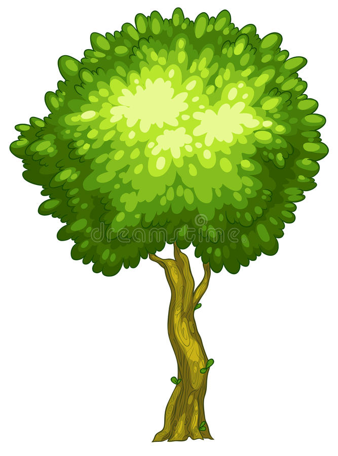 A tall tree royalty free illustration