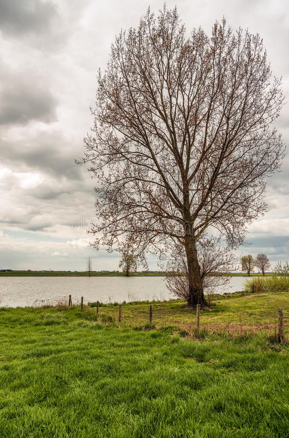 Tall tree just budding on the flood plain of a Dutch river. Tall tree just budding on the flood plain of the Dutch river Bergsche Maas near the village of Dussen royalty free stock photo