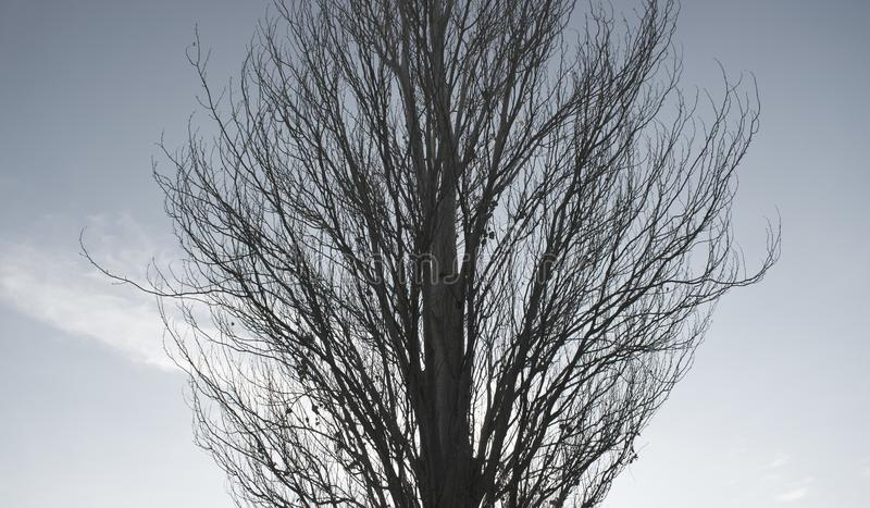 A tall tree in autumn stock photo