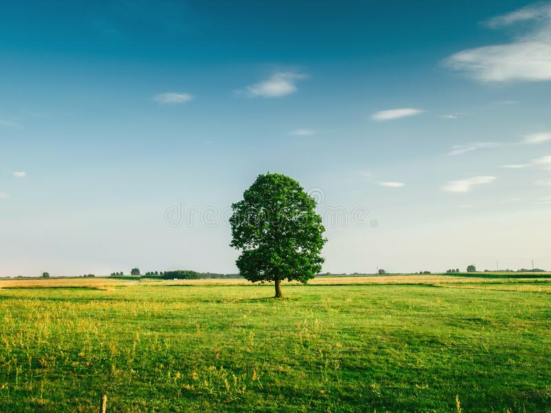 Tall Tree On The Middle Of Green Grass Field During Daytime Free Public Domain Cc0 Image
