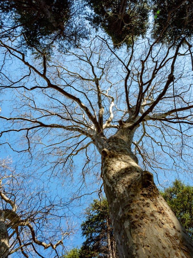 Tall standing tree stock photos
