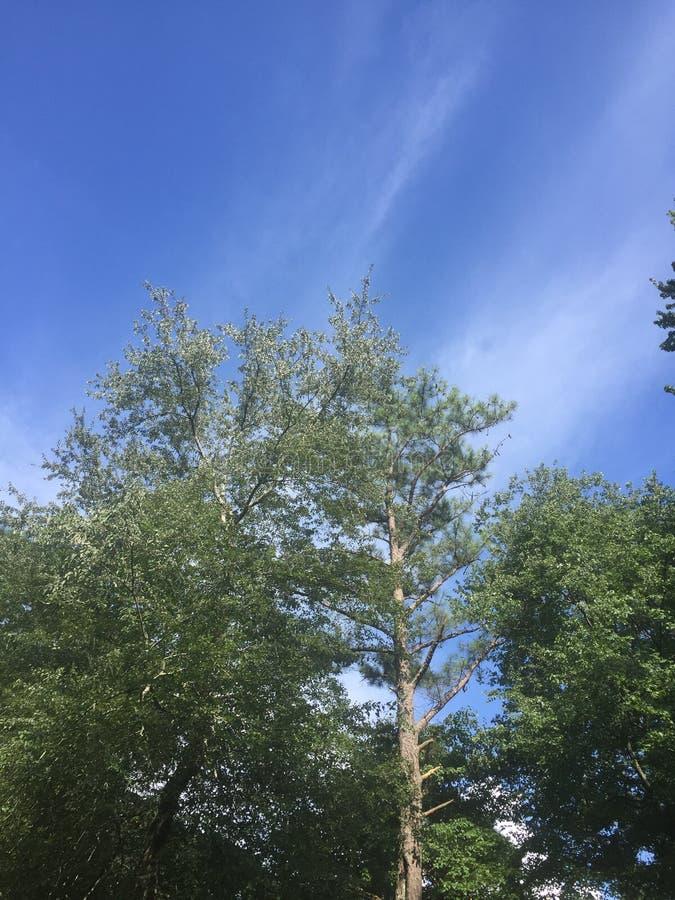 Tall tree stock photography