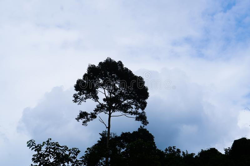 Tree silhouette on blue sky. Tall tree silhouette on blue sky royalty free stock photography