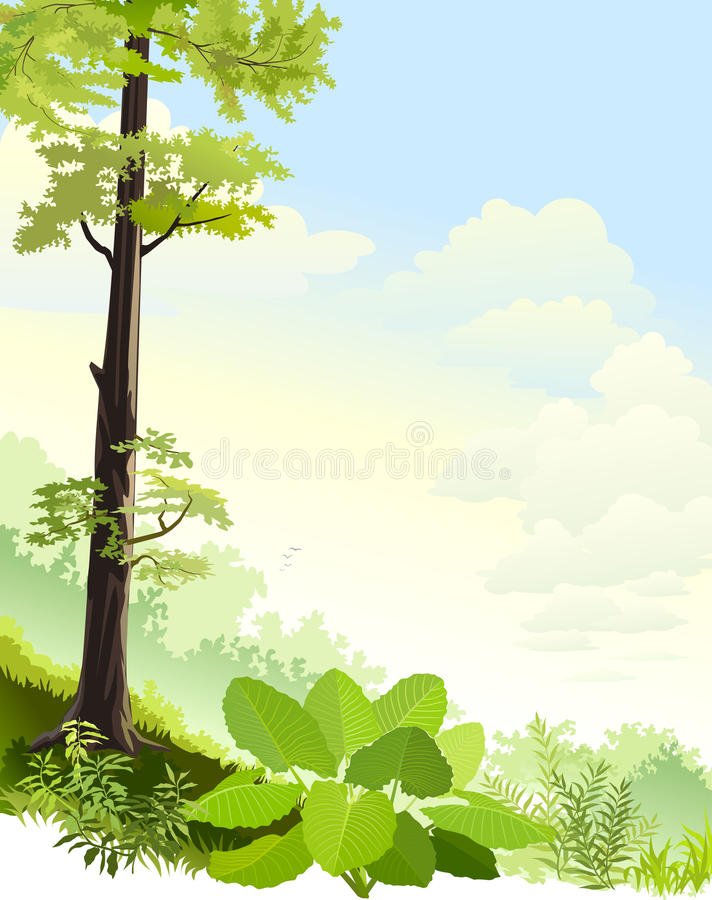 Tall trees in Amazon rain forest royalty free illustration