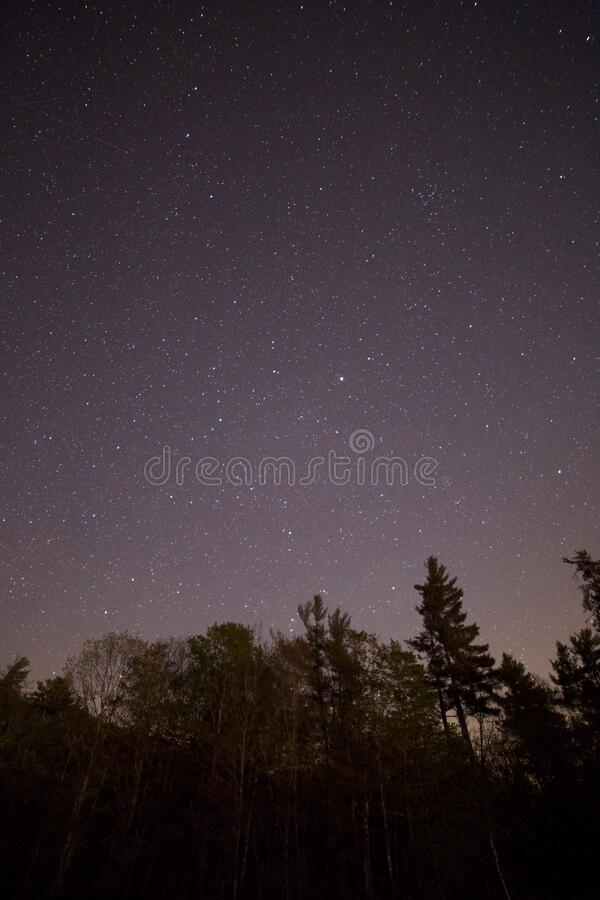 Tall Trees during Night Time royalty free stock photo