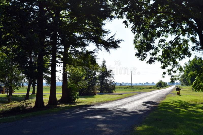 Country lane big trees Mississippi Delta farmland royalty free stock images