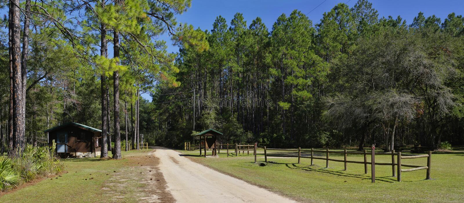 The picnic site at Lake Talquin State Park and Forest with tall glorious pine trees in Tallahass stock photos