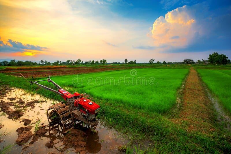 Talle rouge de puissance dans le domaine de riz photo libre de droits