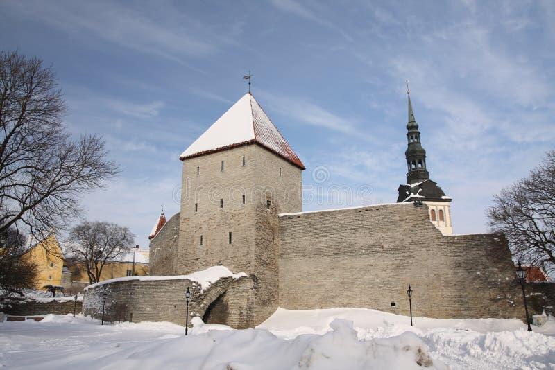 Tallinn lizenzfreie stockbilder