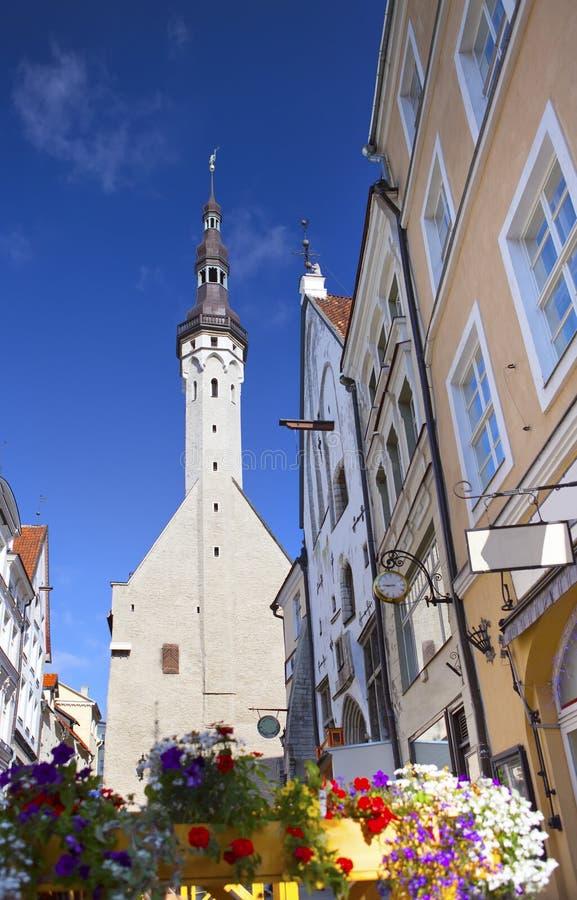 Tallinn Estland, gata av den gamla staden med ljusa hus och en stadshusgrov spik arkivfoto
