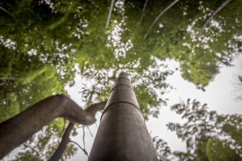 Tallo de bambú que alcanza en el cielo imagenes de archivo