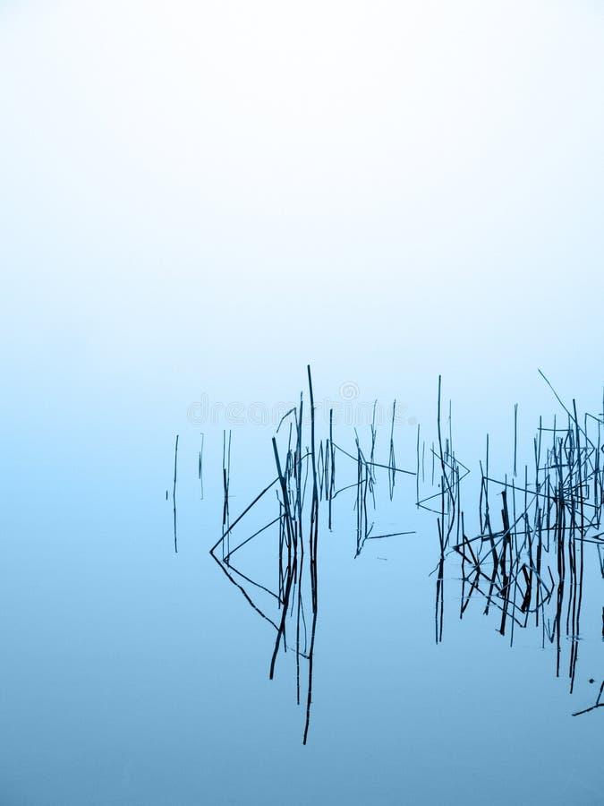 Tallos de lámina por el brumoso a orillas del lago imagen de archivo