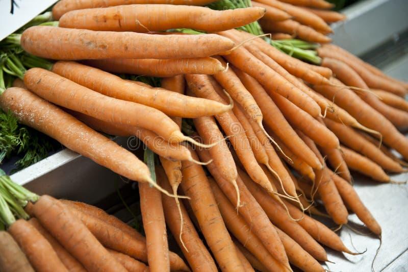 Tallos de la zanahoria fotografía de archivo