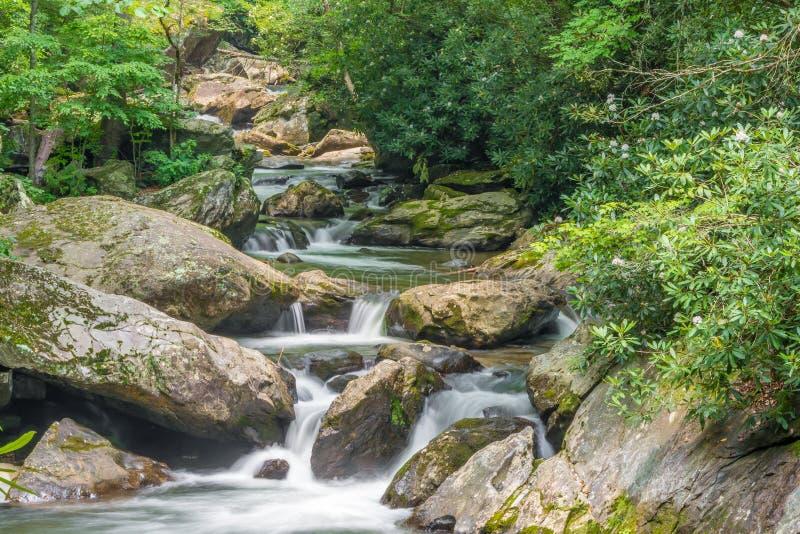 Tallulah River Headwaters royaltyfri bild
