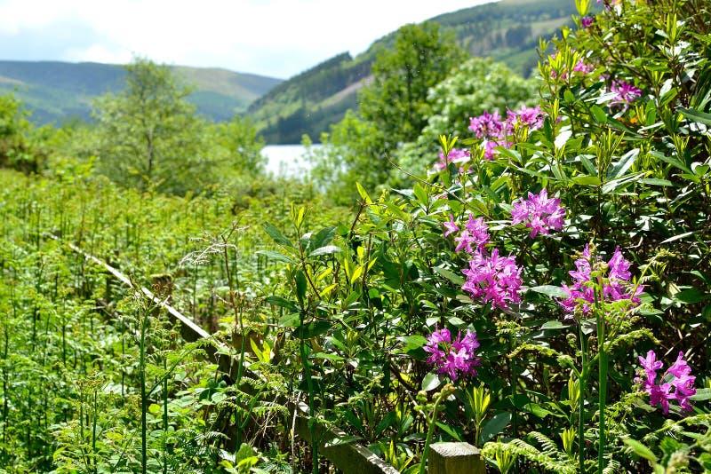 talybont-op vallei en reservoir royalty-vrije stock afbeeldingen