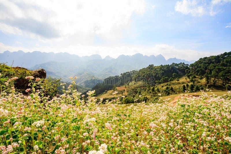 Tam Giac Mach Flowers Farm arkivbilder