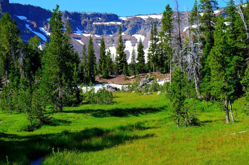Tam McArthur外缘在一个高山草甸上隐约地出现 免版税库存照片