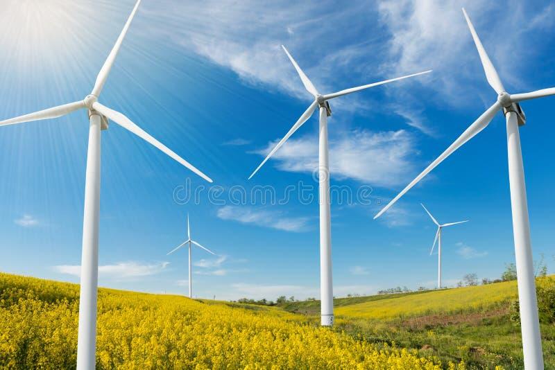 Tam są wiele silnych wiatrów turbiny na polu żółty kwiatonośny canola pojęcie energia odnawialna fotografia stock