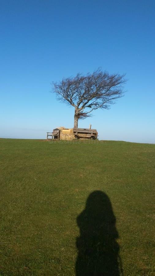 Tam stał osamotnionego drzewa obrazy stock
