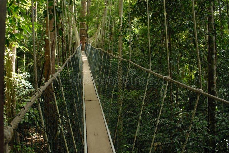 taman malaysia negara royaltyfri bild