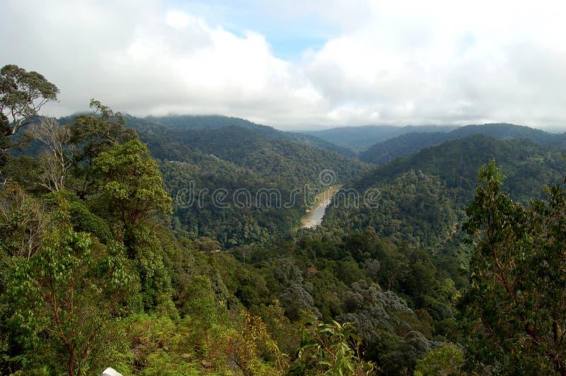 Taman Negara, Dschungelansicht, Malaysia stockfotografie
