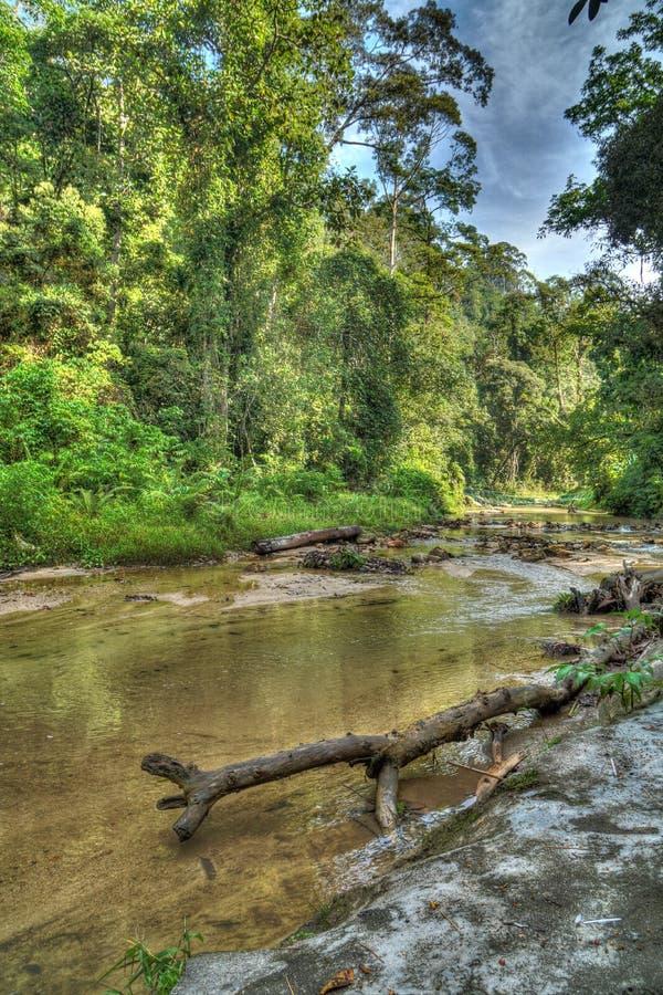Taman Rimba Ampang photos libres de droits
