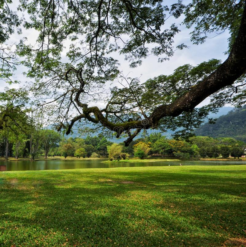 Taman tasik taiping eller Taiping sjö i Perak, Malaysia arkivfoton