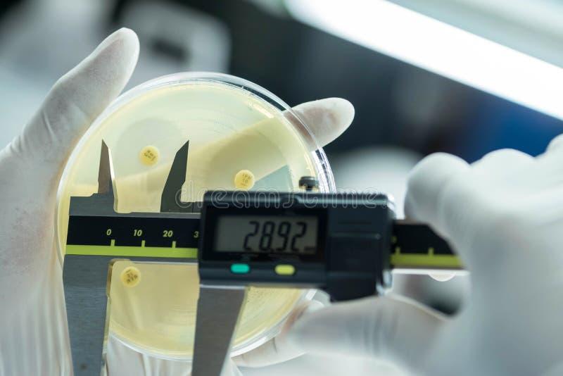 Tamanho da zona das bactérias como o teste do subsensitivity em Mueller-Hinton a fotografia de stock royalty free
