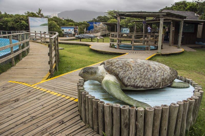 Tamar Project - Florianópolis/SC - le Brésil photos libres de droits