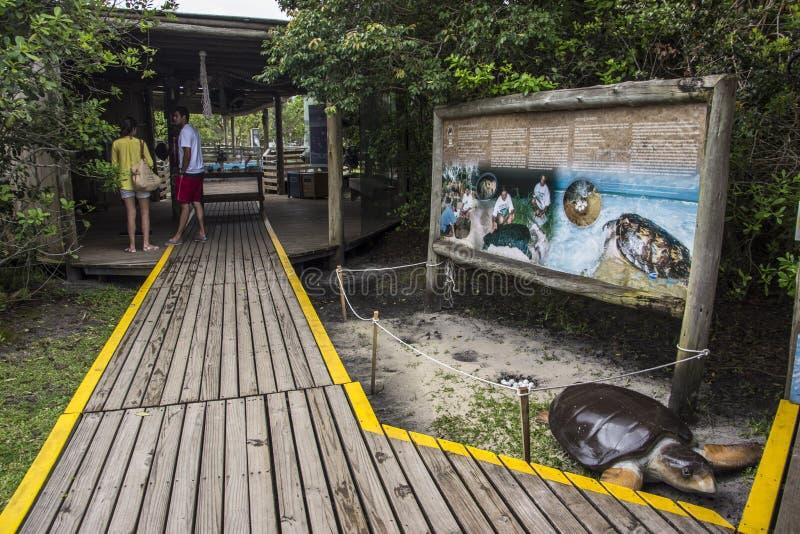 Tamar Project - Florianópolis/SC - le Brésil images stock