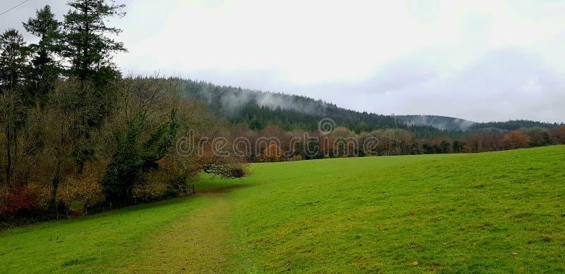 Tamar Valley devon side . Country walk , uk stock photo