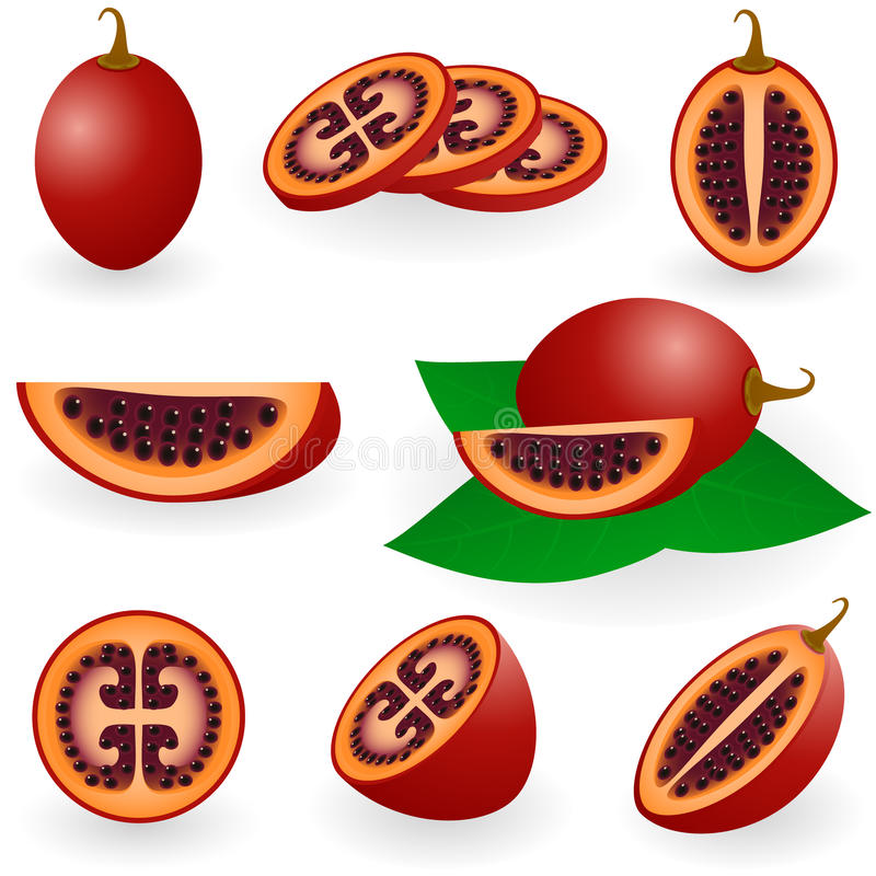 Tamarillo stock illustration