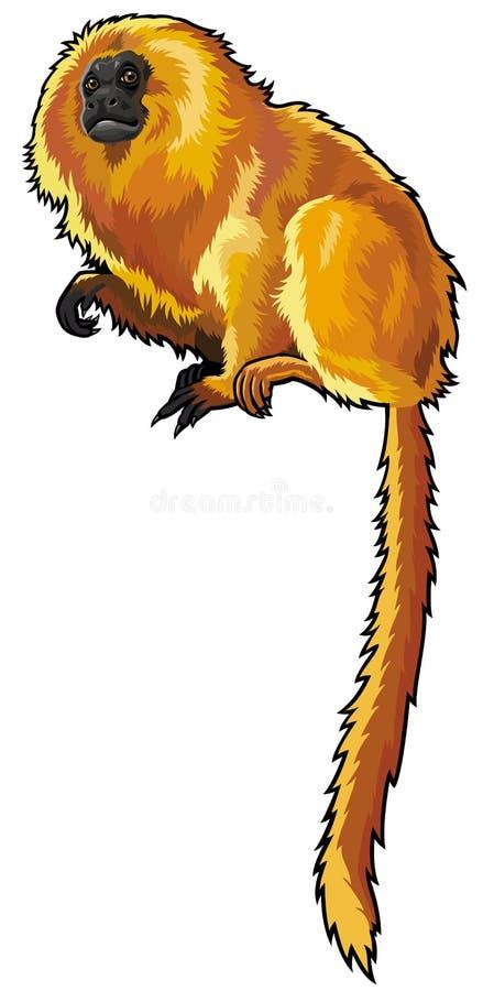 Tamarin d'or de lion illustration stock